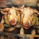schweine öl/holz 60x80cm